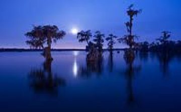 cropped-swamp-areas-of-louisiana-e14424586377152.jpg